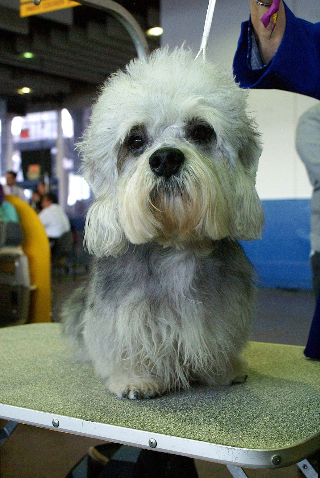 Dandie Dinmont Terrier Information - Dog Breeds at ...